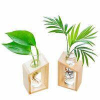 Cute Succulent Plant Flower Pot Container Crystal Glass Hydroponic Plants Pot