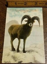 Vtg 1931 ROCKY MOUNTAIN BIGHORN SHEEP CARD-Leadville (CO)~Lithochrome Postcard