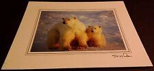 Animal Photo Print - 8x10 - Polar Bear and Cub 2 - New, Matted -Hq Gift