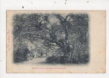Jenny Lind Burnham Beeches 1904 Postcard 854a