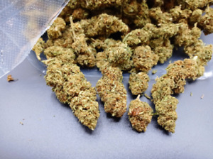 cannabis Marijuana Sativa legale certificata super cheese