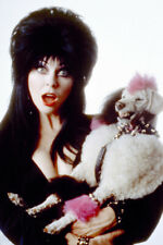 Elvira: Mistress Of The Dark Cassandra Peterson Holding Poodle Dog 24X18 Poster