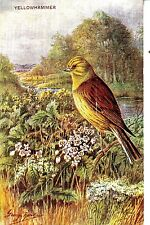 CK64. Vintage Postcard. Yellowhammer. By George Rankin.