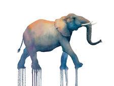 Oliver Flores-Elefante Lienzo Enmarcado Walk-listo