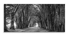 Forest Road Canvas Black White Corridor Panorama Wall Art Picture Home Decor