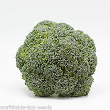 "Brocoli variedad: Calabrese Brassica oleracea 100 exotischesamen ""todo sólo 1 euro"""