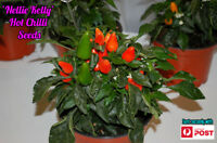 Ornamental Chilli Seeds x 10 Organic Heirloom  Thai Birds Eye Chili