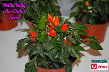 FATTY Chilli Seeds x 10 Organic Heirloom Thai Birds Eye Chili