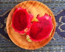 Dragon fruit cuttings red x 2