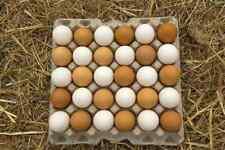 Best Hatching Eggs * One Dozen* Barred Rock, White Leghorn, Rhode Island Red