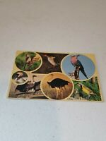 Vintage Color South Africa Birds Postcard New Unused Rare