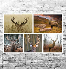 STUNNING SCOTTISH STAG LANDSCAPES CANVAS COLLAGE #1 QUALITY WILDLIFE WALL ART