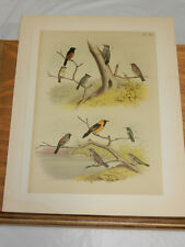 1878 Studer Color Bird Print/Song Sparrow, Sapsucker, Titmouse, Finch, Oriole