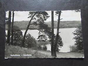 AK Werbellinsee Schorfheide um 1958 ungelaufen