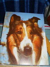 "Lassie photo 8""w x 10"" h * from Recipe Brand Dinners Paw Print & Photo"