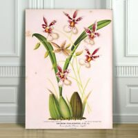 """JEAN LINDEN - Beautiful Purple & White Orchid #19 - CANVAS PRINT POSTER -10x8"""""""