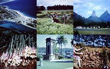 7 x Slides Mooloolaba Ginger Plant Buderim Glasshouse Mountains Beerwah 1960/70s