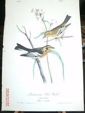 AUDUBON'S BIRDS of AMERICA - Plate 87 - Blackburnian Wood-Warbler