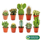 10+X+DIFFERENT+MIXED+CACTUS+COLLECTION+HOUSE+%2B+GARDENERS+DREAM+PLANT+CARE+GUIDE