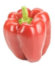 Heirloom Big Red Sweet Pepper 50 Seeds Non-GMO USA + FREE Gift & COMB S/H