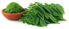 Organic Moringa Leaf Powder Wholesale Price 500g Premium Indian Export Grade