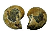 Pareja de Amonites fosilizados de @ 2 cm