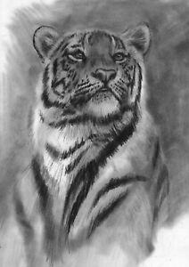 original drawing A3 312PY art samovar Charcoal realism animal tiger Signed 2021