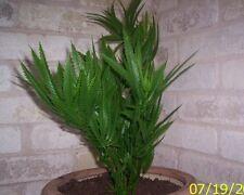 FAKE ARTIFICIAL MARIJUANA PLANT