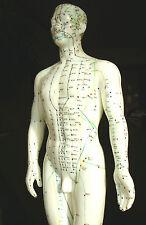 Akupunktur Lernmodell Mann 50cm, Akupuppe, Meridianpuppe, Akupunkturpuppe