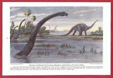 1942 Magazine Print by Charles R Knight ~ Dinosaur DIPLODOCUS Harmless & Stupid
