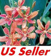 15 Pcs Seeds Blackberry Lily Seeds G58, Garden Perennial Flowers