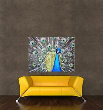 GIANT PRINT POSTER NATURE PHOTO BIRD PEACOCK FEATHER BEAUTIFUL PDC050