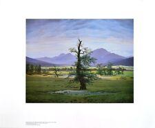 Caspar David Friedrich il solitario albero poster stampa d'arte immagine 60x80cm