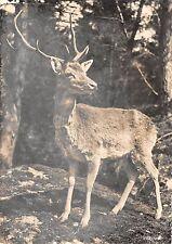 BR56412 Zoologischer garten Zurich hirsch dear chavre Animaux animals