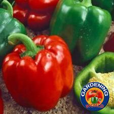 150 Keystone Giant Pepper Heirloom Seeds - Free Gift - COMB S/H