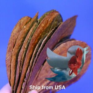 12Pcs XLarge Indian Catappa Almond Leaves For Betta And Shrimp- Premium Quality