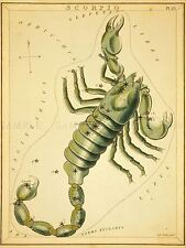 PAINTINGS DRAWING STAR MAP SCORPIO SCORPION CONSTELLATION POSTER PRINT LV3140