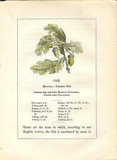 Stampa antica PIANTE DELLA BIBBIA QUERCIA Quercus 1842 Old antique print