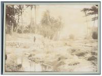 Algérie, Mansoura Vintage print.  Tirage citrate  11x16  Circa 1900
