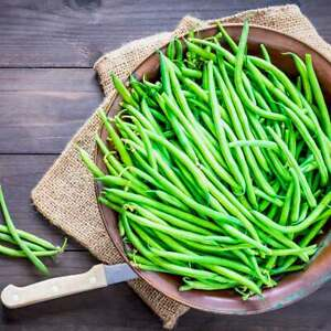 20 Dwarf French Green Bean SPRITE Seeds – Easy To Grow – Free Postage