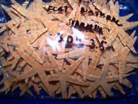 """LOT 65+ REAL TAN STARFISH 3""""+ STAR FISH SEASHELLS wow! ITEM # TSF3-65"""