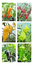Chilli Pepper Seeds - Salad Selection