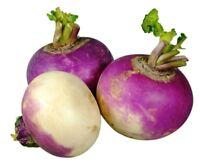 Purple Top White Globe Turnip Seed - Garden Root Vegetable Seeds (¼oz to 8oz)