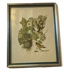 Vintage Framed & Matted Audubon Print Baltimore Oriole Plate 12 Bookplate 1937