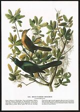 1930s Original Vintage Audubon Boat-Tailed Grackle Bird Art Print