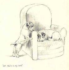 Sealyham Terrier - Vintage Dog Print - 1948 Kf Barker