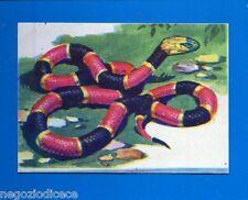 ANIMALI - Lampo 1964 - Figurina-Sticker n. 282 - SERPENTE CORALLO -New