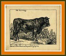 1916 Stier Russische Kunst Russian artist Ivan Sermoskin Original drawing Bull
