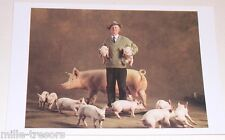 Carte Postale Photo Yann ARTHUS BERTRAND : Cochon Large White avec ses petits