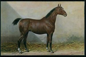 art Otto Eerelman Germany Holsteiner Horse print original vintage 1910s postcard